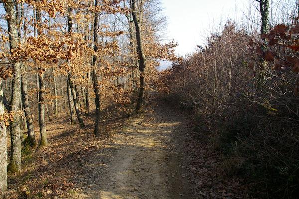 Le chemin vers Pétarri