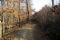 Le chemin vers Petarri