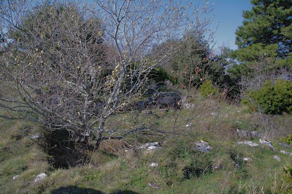 Des traces de civilisation près de l_oppidum de Berniquaut
