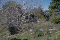 Des traces de civilisation pres de l'oppidum de Berniquaut