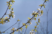 C_est le printemps!