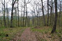 Dans les bois sous le Pas de Caillaret