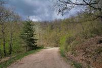 La route forestière de la Baronne