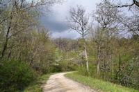 La route forestiere de la Baronne