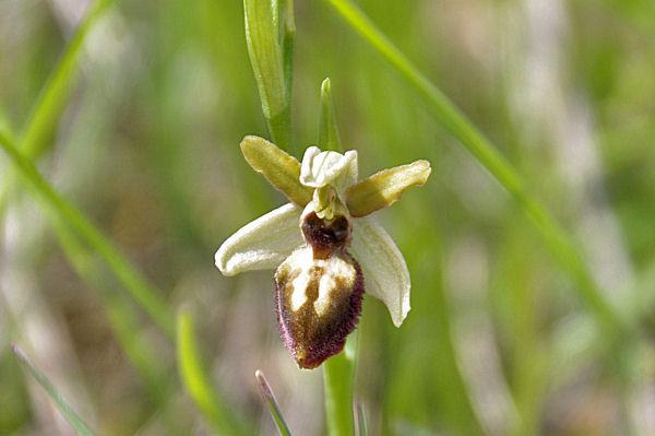 Belle orchidée vers Bosc de Sales
