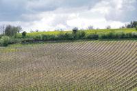 Les vignes vers La Barthe