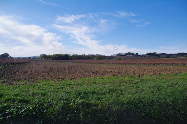 Les vignes sous Bories-Vieilles