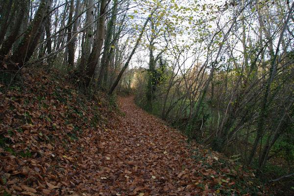 Le chemin arboré menant à St Etienne de Vionan