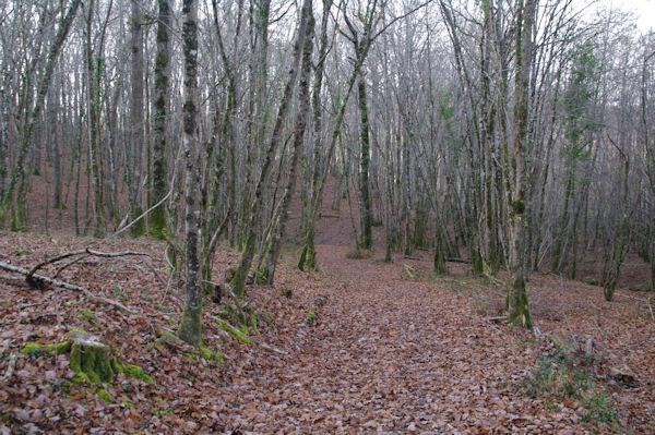 Dans le Bois de La Bouyssière