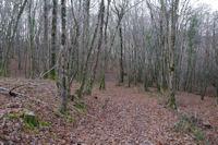 Dans le Bois de La Bouyssiere