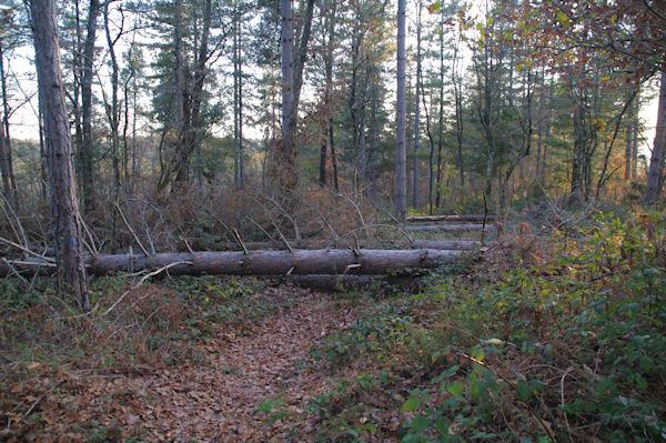 Le chemin barré par les arbres couchés par la tempête Klaus au dessus de La Plancade