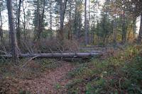 Le chemin barre par les arbres couches par la tempete Klaus au dessus de La Plancade