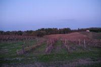 Les vignes vers Coudougnac