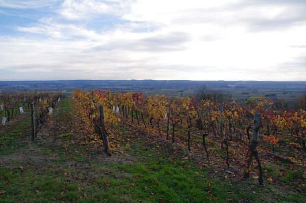 Les vignes de Montegut, au fond, la vallée du Tarn