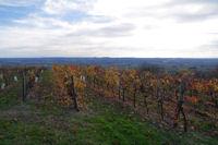 Les vignes de Montegut, au fond, la vallee du Tarn