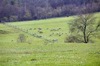 Des moutons vers La Ginibriere