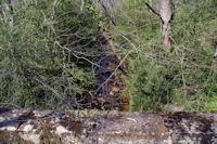 Le ruisseau du Ro Oriental