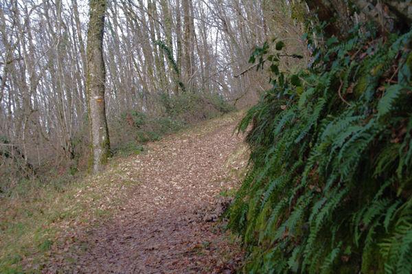 Le chemin vers La Peyre