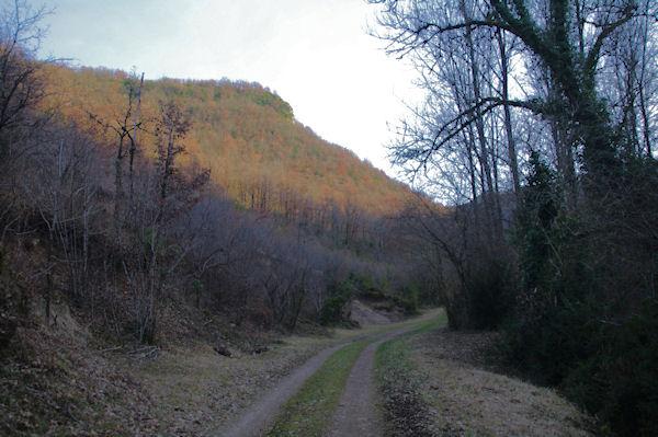 Le chemin remontant la vallée du ruisseau de Laussière