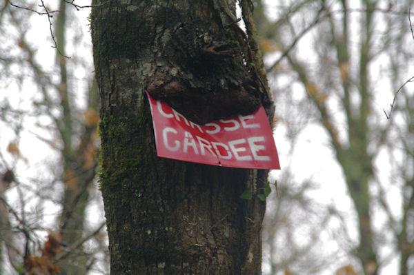 Révolte forestière