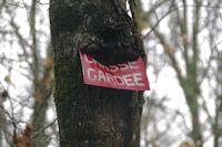 Revolte forestiere
