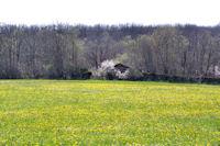 C_est le printemps à Cirbelle
