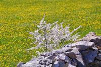 C'est le printemps a Cirbelle