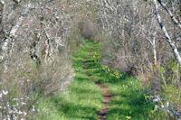 Farandole de dolmens vers St Antonin Noble Val