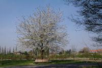 C'est le printemps au Bois de la Deûle