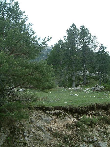 Le Mont Ventoux depuis le Contrat
