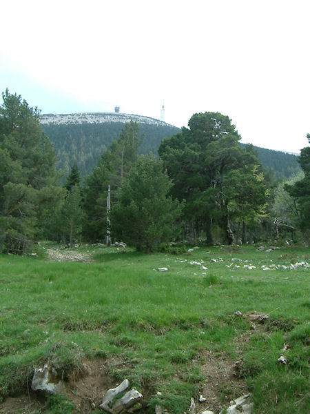 Le Mont Ventoux depuis la Loubatière