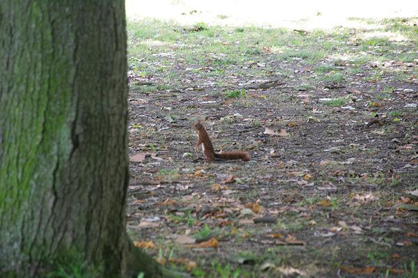 Un écureuil pas très farouche