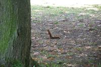 Un ecureuil pas tres farouche