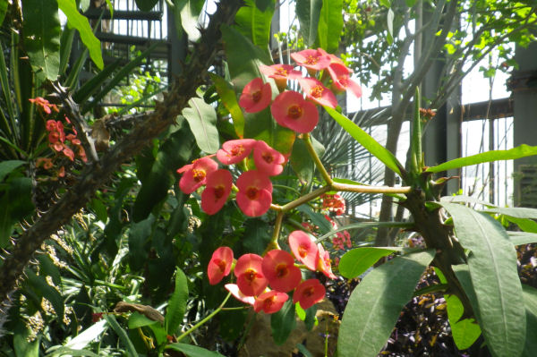 Dans les serres du jardin botanique