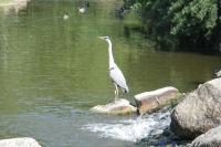 Bel heron