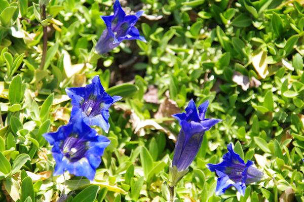 Au jardin botanique du parc de la Tête d_Or