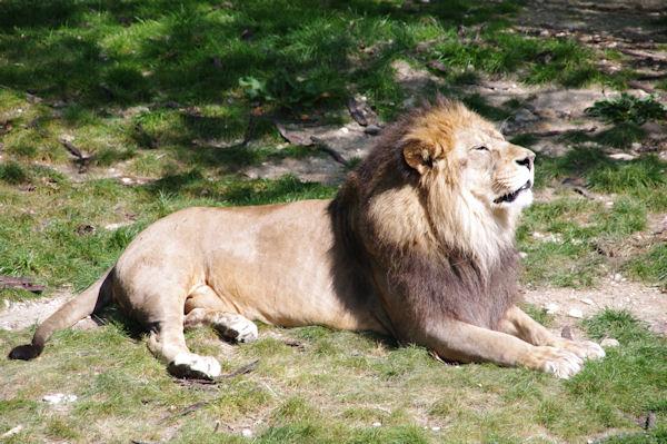 Le pacha du parc zoologique de la Tête d_Or