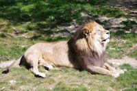 Le pacha du parc zoologique de la Tete d'Or