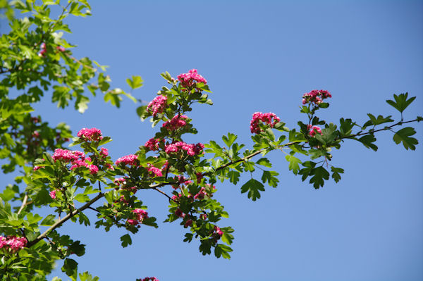 Le printemps à la Tête d_Or
