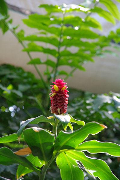 Exotisme dans les serres du jardin botanique du parc de la Tête d_Or