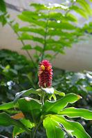 Exotisme dans les serres du jardin botanique du parc de la Tete d'Or